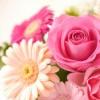 花言葉一覧~誕生日別、感謝・恋愛・希望を伝える花~